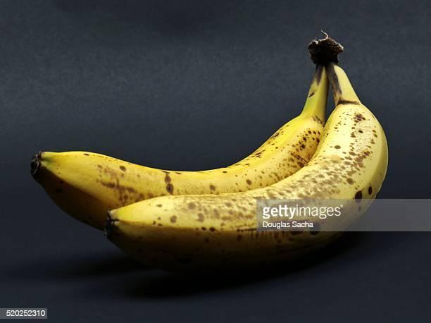 Over ripe Banana Fruit (Musa acuminata)