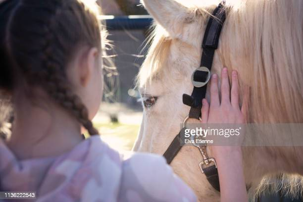 Over shoulder view of girl stroking white horse