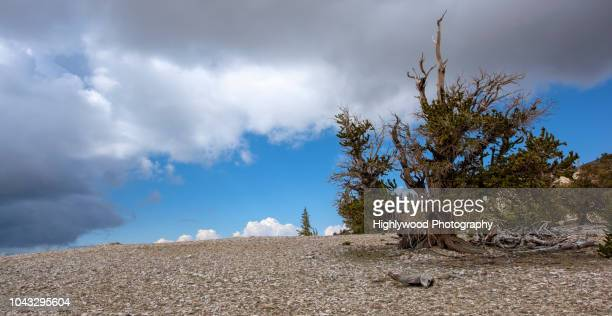 over the hills where spirits fly - highlywood stock photos and pictures