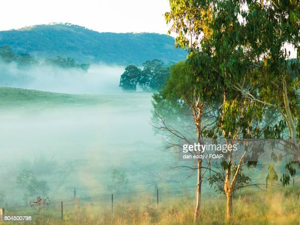 over view of foggy forest - dan peak stock photos and pictures