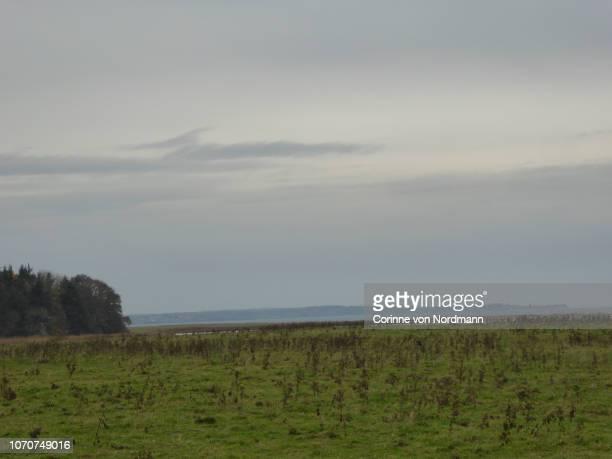 overcast grassy coastline - corinne paradis ストックフォトと画像