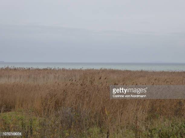 overcast grassy coastline with reeds - corinne paradis ストックフォトと画像