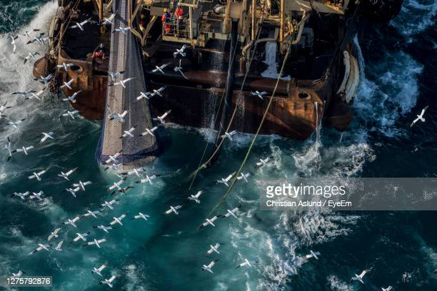 overfishing, northern gannets,  trawler fishing for herring in the english channel, autumn spawning. - north sea stock pictures, royalty-free photos & images