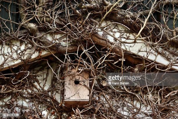 Overgrown birdcage