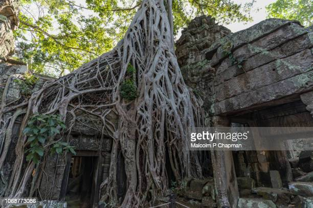 "overgrown doorway at ta prohm temple in ankgor, siem reap, cambodia also known as rajaviharain or 'jungle temple' - cambodia ""malcolm p chapman"" or ""malcolm chapman"" stock pictures, royalty-free photos & images"