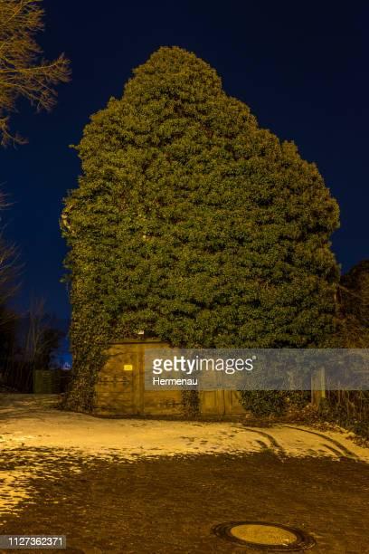 overgrown parish bam - geschichtlich stock pictures, royalty-free photos & images