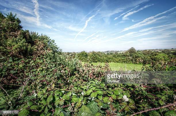 Repleto de Vegetação de Setembro Hedge Cornualha Reino Unido