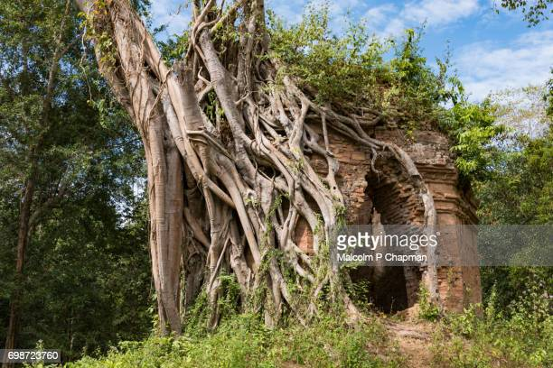 "overgrown temple, part of the prasat trapeang ropaeak complex, sambor prei kuk, kampong thom, cambodia - cambodia ""malcolm p chapman"" or ""malcolm chapman"" stock pictures, royalty-free photos & images"