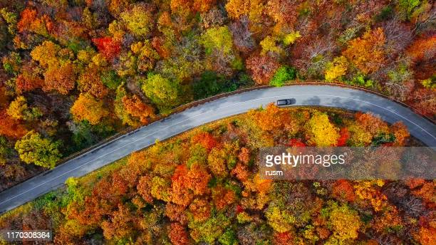overhead aerial view of winding mountain road inside colorful autumn forest - strada foto e immagini stock