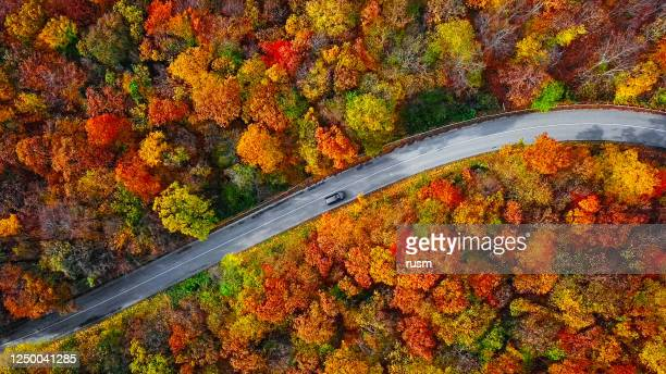 overhead aerial view of winding mountain road inside colorful autumn forest - autumn stock pictures, royalty-free photos & images
