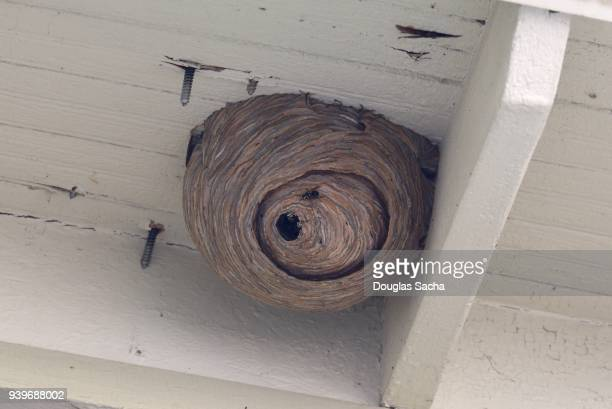 overhead insect hive - queen bee stock pictures, royalty-free photos & images