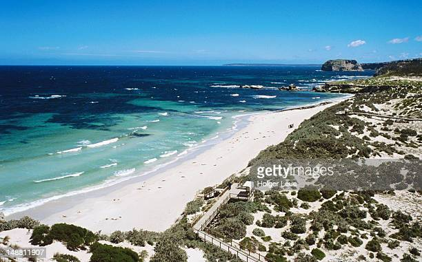 overhead of australian sea lions on beach, seal bay conservation park. - kangaroo island stock pictures, royalty-free photos & images