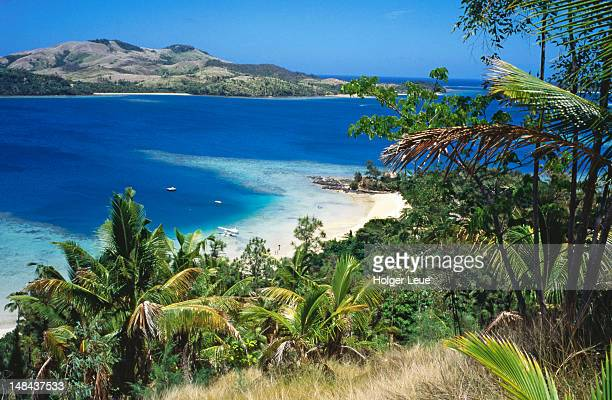 overhead of beach and palm trees at turtle island resort. - western division fiji stock photos and pictures