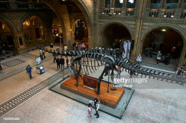 Overhead of main hall, Natural History Museum.
