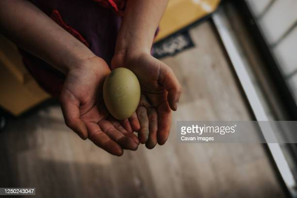overhead of young girl holding a dyed chicken egg - dirty easter stock pictures, royalty-free photos & images