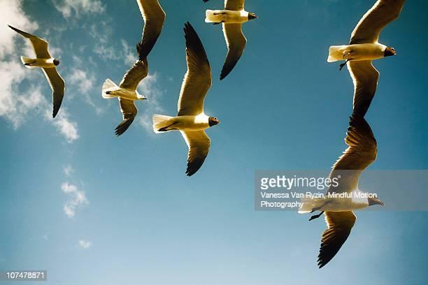 overhead - vanessa van ryzin ストックフォトと画像