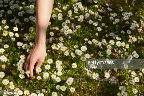 overhead shot of a woman's hand picking wild flowers. - カーキグリーン ストックフォトと画像