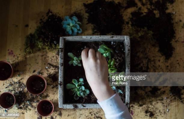 Overhead shot of children planting succulents.
