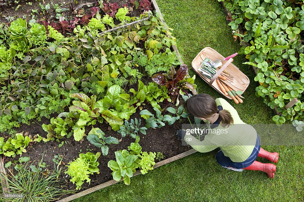 Vegetable Garden Stock Pictures Royalty Free Photos Images