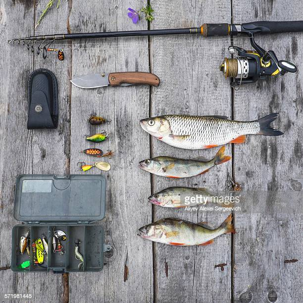 overhead still life of four caught fish and fishing equipment - fishing tackle stock pictures, royalty-free photos & images