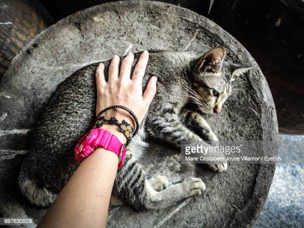Overhead View Of A Person Stroking A Cat