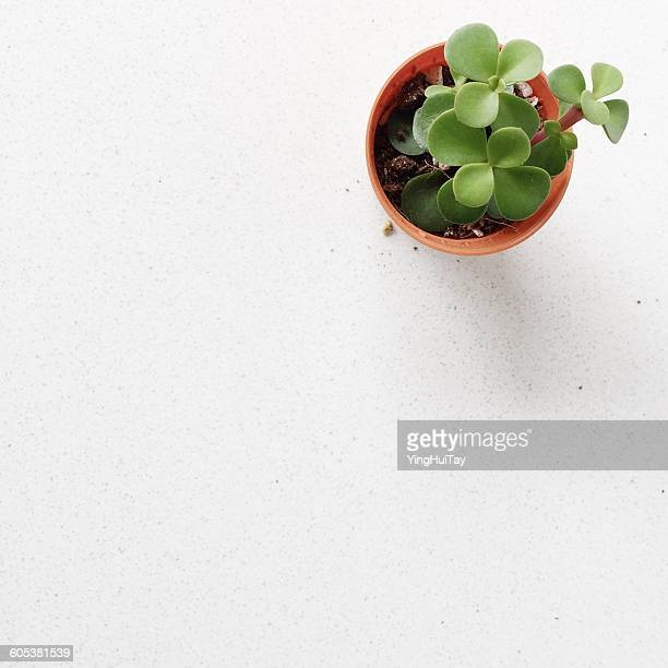 Overhead view of a succulent plant in a flower pot