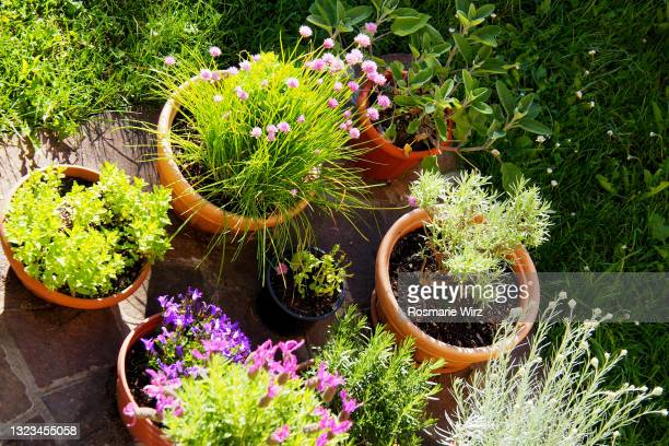 overhead view of back garden with flower pots - ornamental plant stock pictures, royalty-free photos & images