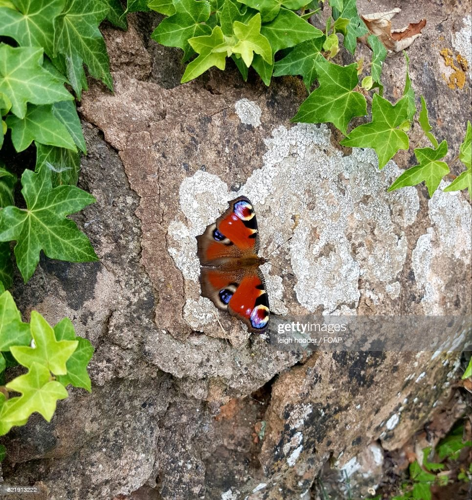 Overhead view of butterfly on rock : Stock Photo