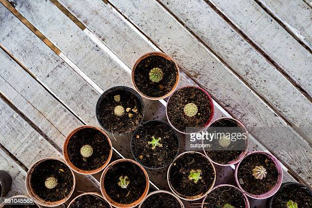 Overhead view of cactus plants in pots