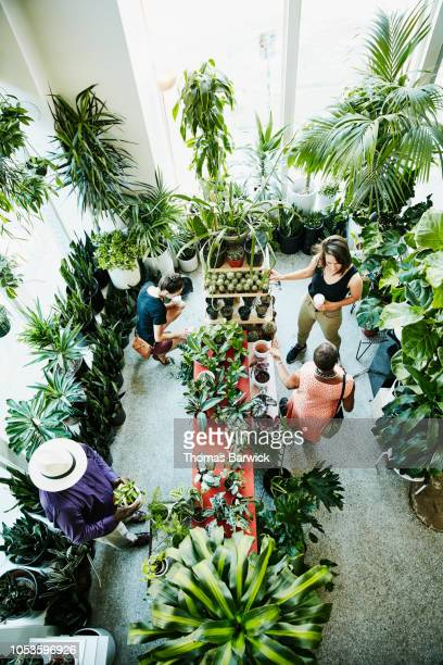Overhead view of customers shopping in plant store
