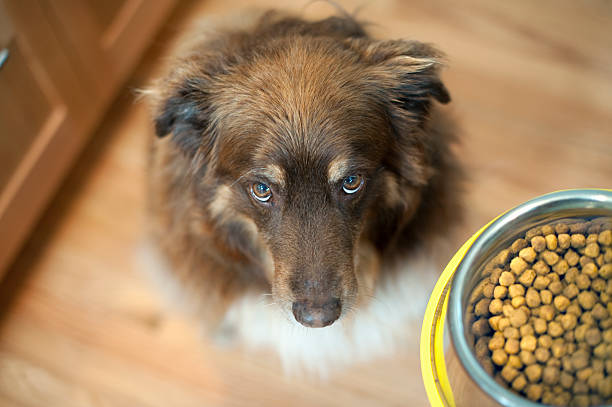 Top 10 Best Dog Food Brands in South Africa [UPDATED 2021]