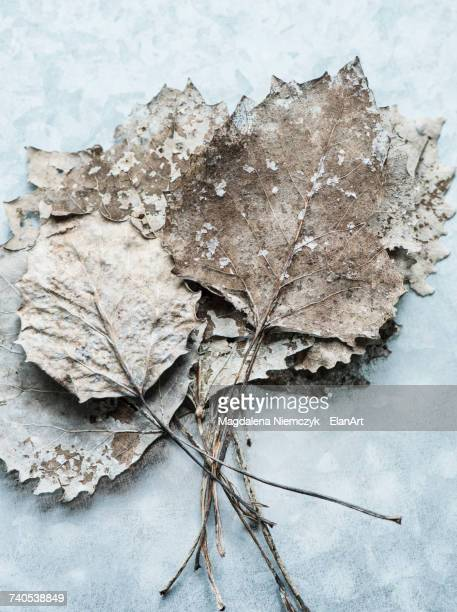 Overhead view of dried leaves