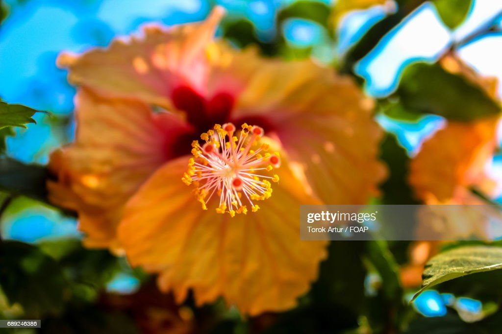 Overhead view of perennial flower : Stock Photo