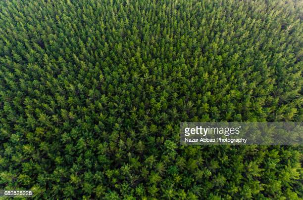 overhead view of pine forest, new zealand. - floresta - fotografias e filmes do acervo