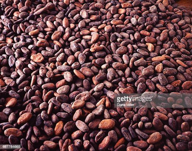 Overhead view of raw cocoa beans, chocolate ingredient