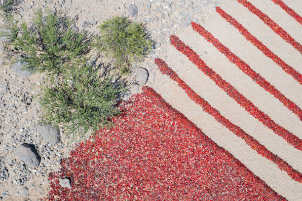 Overhead View of Red Peppers Drying in the Desert