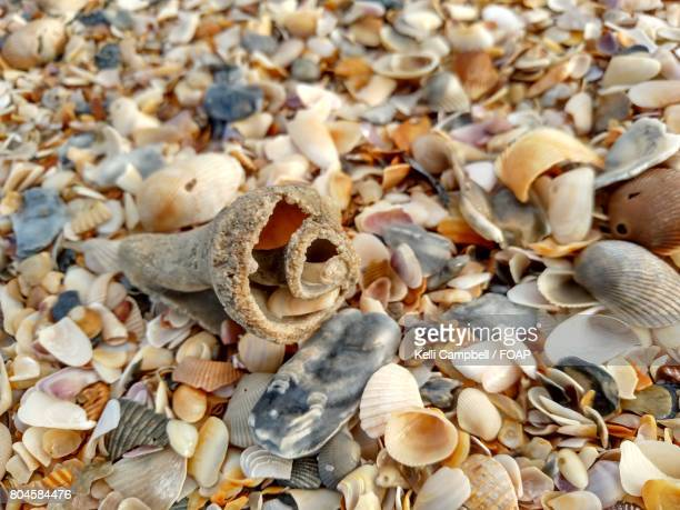 overhead view of seashells - kelli campbell stock pictures, royalty-free photos & images
