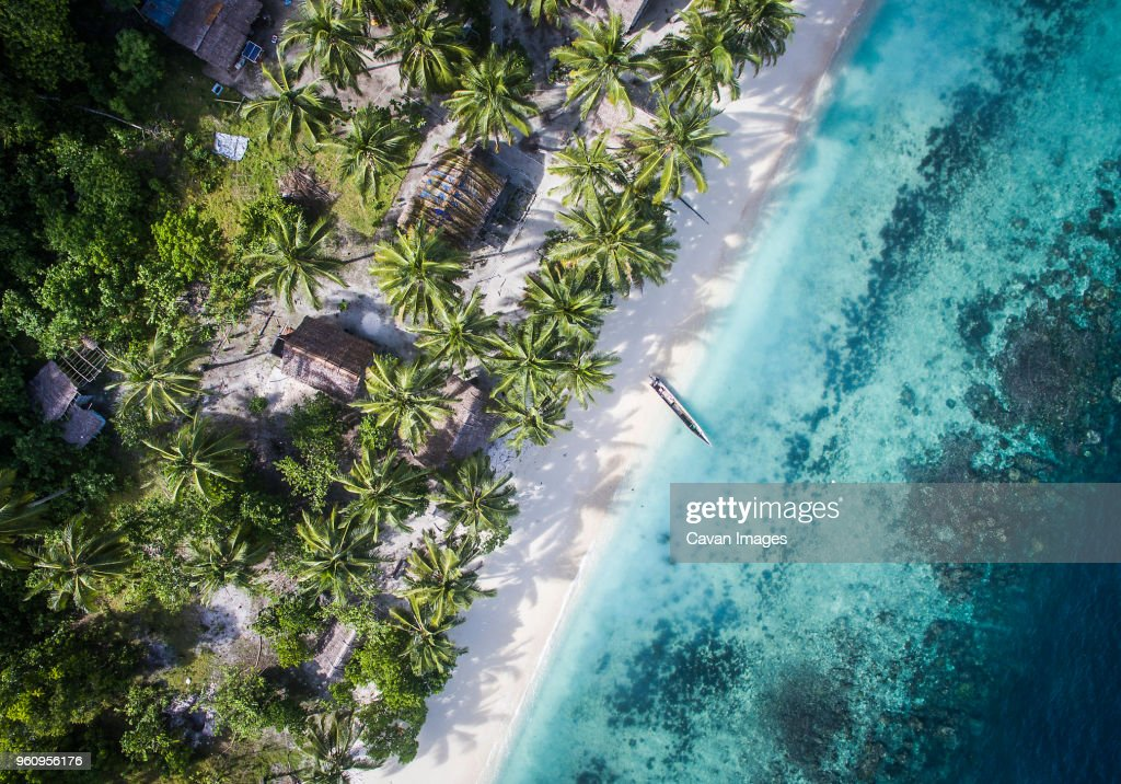 Overhead view of trees on shore by sea : Stock Photo