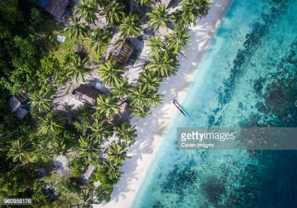 overhead view of trees on shore by sea - raja ampat islands stock photos and pictures