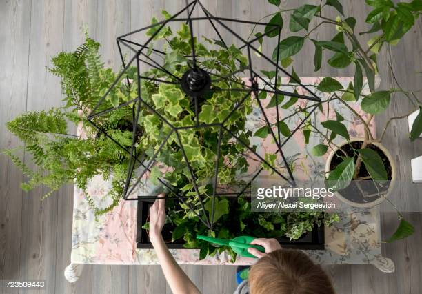 overhead view of womans hand watering plants in kitchen - green fingers stock pictures, royalty-free photos & images