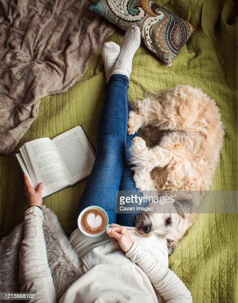 overhead view of woman's torso on a bed with a book, coffee and a dog. - hairy woman stock-fotos und bilder