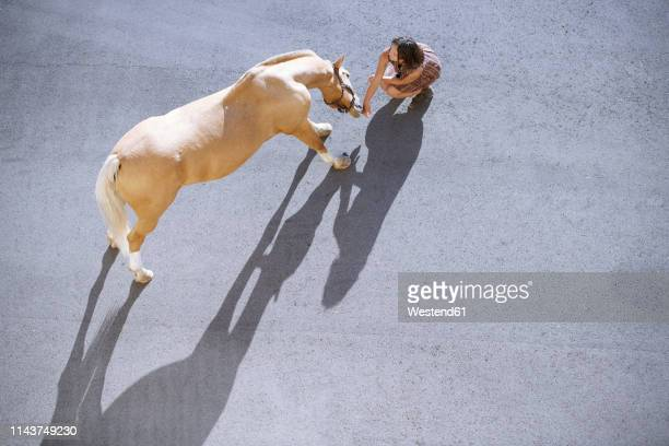 overhed view of woman with horse on tarnac in sunlight - tame stock pictures, royalty-free photos & images
