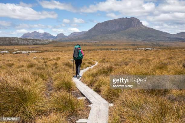 Overland track hiker