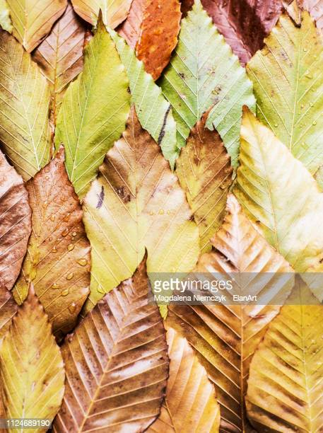 Overlapping autumn leaves, still life, overhead view