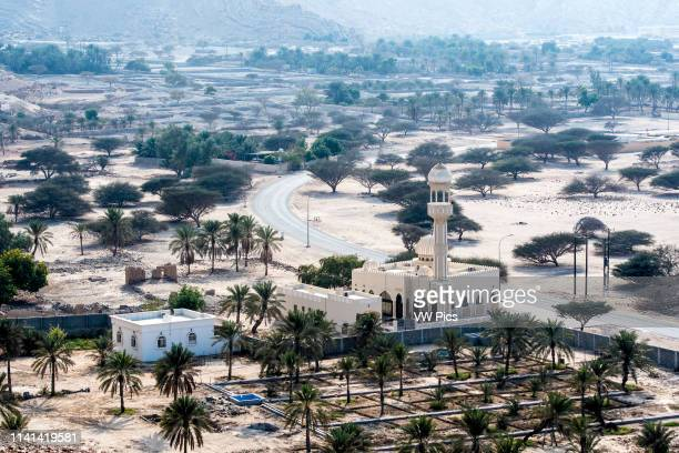 Overlooking a date palm tree farm and mosque within the city of Bukha Oman