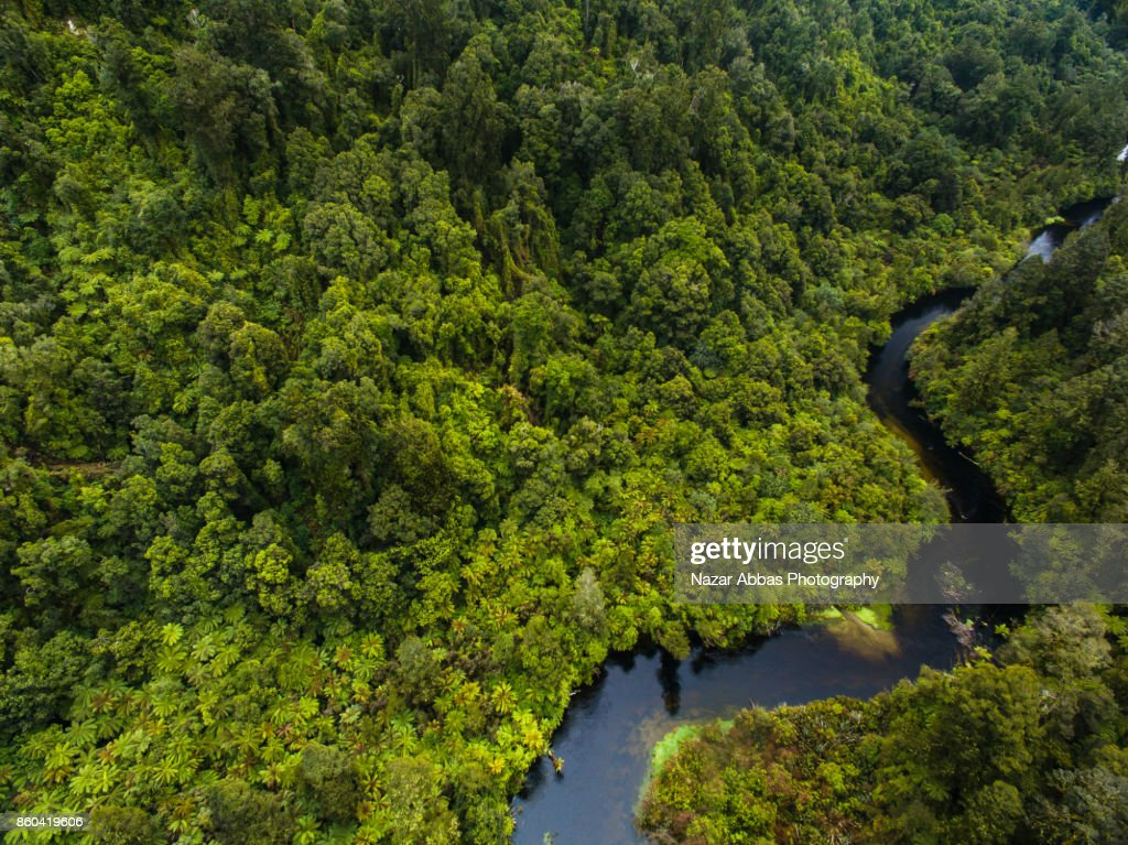 Overlooking at dense forest with river flowing through it. : Stock Photo