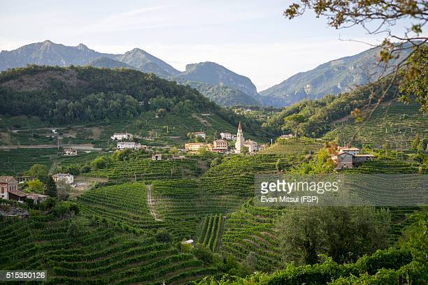 overlooking wine country - veneto stock pictures, royalty-free photos & images