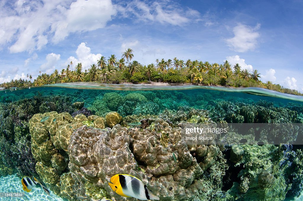 Over/under coral reef : Stock Photo