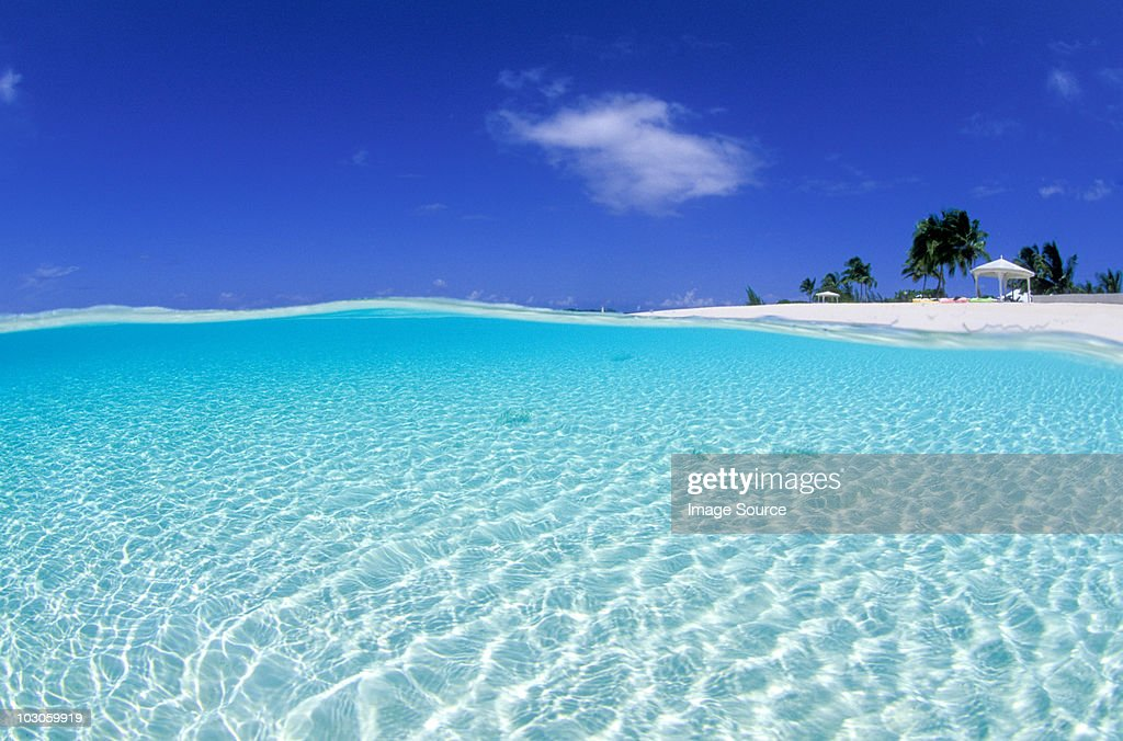 Over/under in shallow water. : Stock Photo