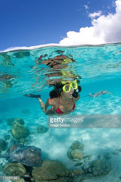 over/under of snorkeler and ray - stingray stock photos and pictures